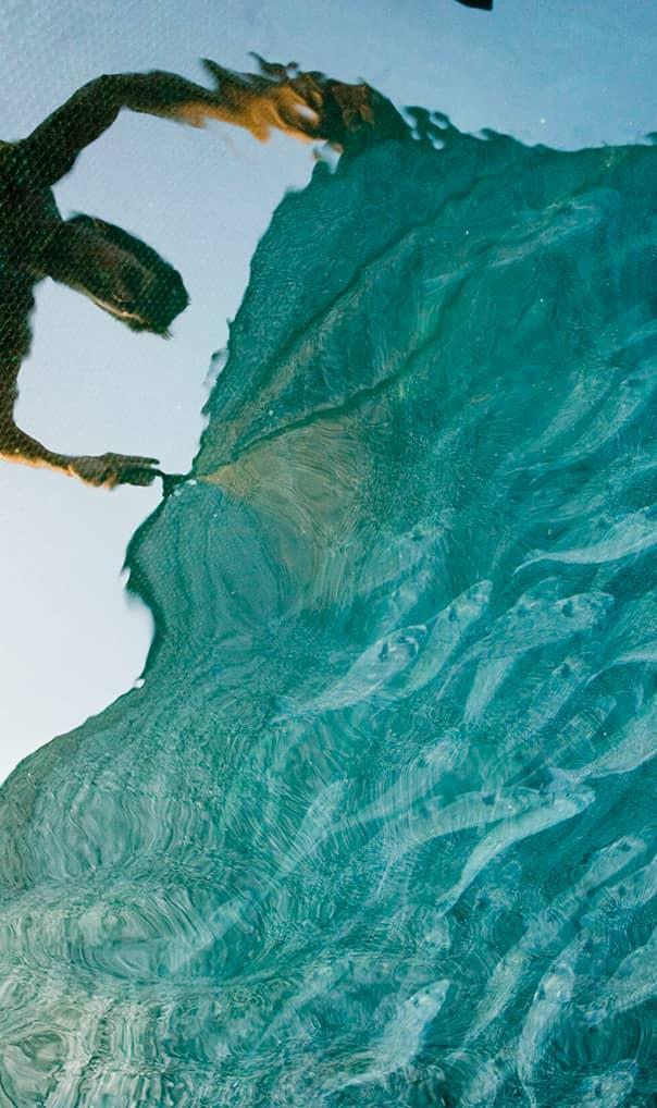 Ochrona środowiska a zmiany klimatu | Spadek liczebności ryb w Bałtyku | Malejąca populacja ryb w Morzu Bałtyckim
