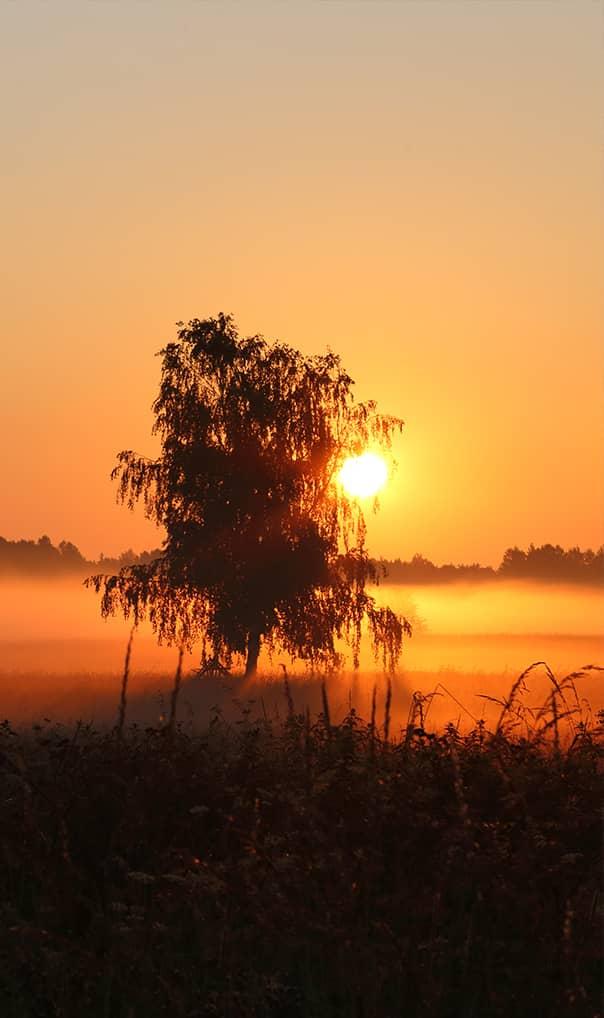 Ochrona środowiska a zmiany klimatu | Parki Narodowe | Dziedzictwo przyrodnicze Polski